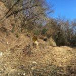 IMG_2612_gezannguti